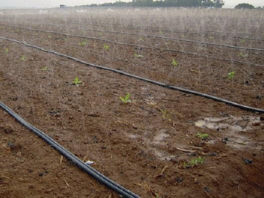 ống tưới phun mưa